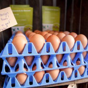 Eieren en zuivel